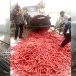 ऐसा गांव जहां की गाजरों ने ही दिला दी देश में पहचान