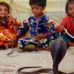 भारत का एकमात्र ऐसा गांव जहां सांपों के साथ आराम से रहते हैं लोग, जानें इसके पीछे की कहानी