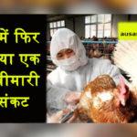 चीन में फिर गहराया एक और बीमारी का संकट, 18 हजार मुर्गियों को मारा